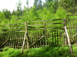 Zalesnene holiny po kalamitach