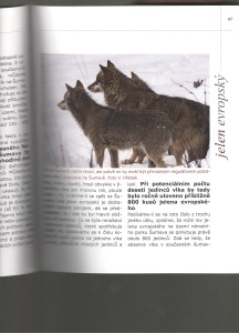 Jelen a Vlk na Šumavě II.